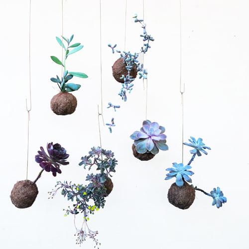lillaplanteplaneter 500 x 500