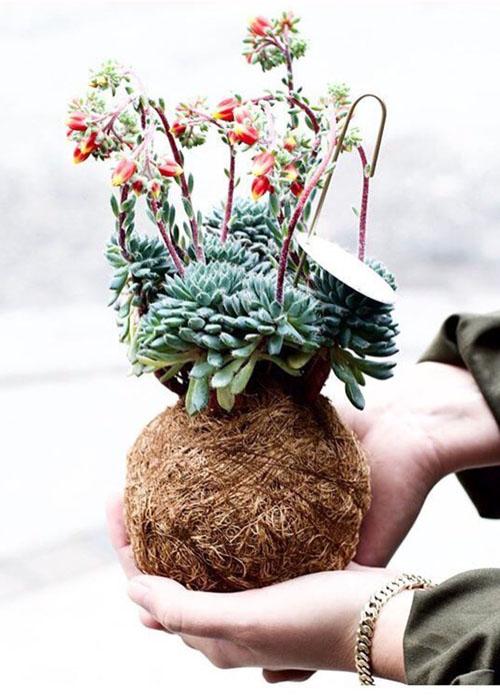 plantehaand 500 x 700